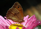 The butterfly-beauty — Stock Photo