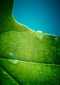Green oak leaf with water drops on it (shallow depth of field) — Stock Photo