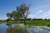 Lagune reflectie 2 — Stockfoto