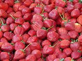 Erdbeeren — Stock Photo