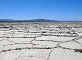 Salzwüste bei Amboy — Stock Photo
