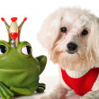 Prince charming Pup — Stock Photo