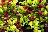 Microgreens upclose — Stock Photo