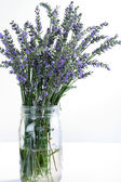 Shot of fresh lavender in glass jar on white vertical — Stock Photo