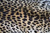 Cheetah Coat — Stock Photo