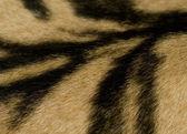 Tiger Skin Detail — Stock Photo