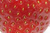 Strawberry Close Up — Stock Photo
