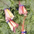 Stock Photo: Swiss Chard Rainbow Bundles