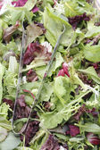 Mesclun salad mix with tongs — Stock Photo