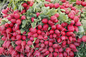 Red radishes for sale — Stock Photo