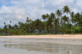 Calm beach — Stockfoto