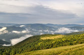 雨后的绿色杉木树山 — 图库照片
