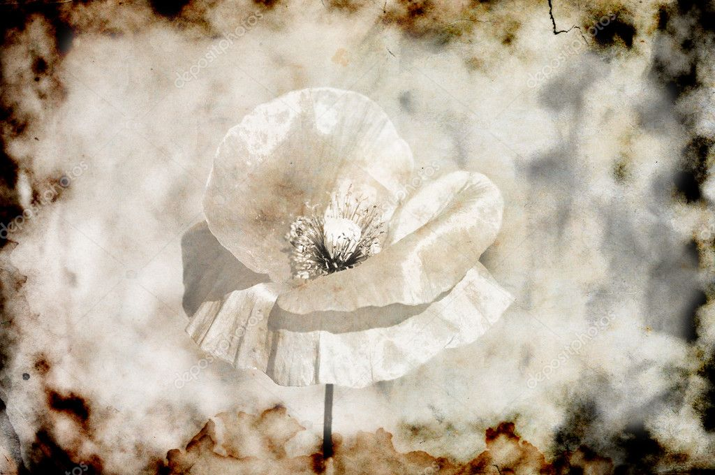 Burned and torn grunge photo of poppy flower sepia  Stock Photo #3772640