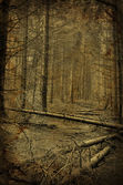 Path into creepy dark fir tree forest — Stock Photo