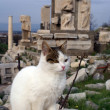 Cat and ruins — Stock Photo
