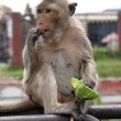 Monkey on the wall — Stock Photo #3618863