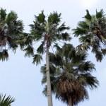 Постер, плакат: Palm trees