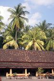 Palm trees — 图库照片