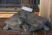 Stone turtle — Stock Photo