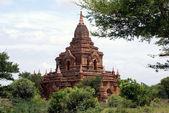 Templo y bush — Foto de Stock