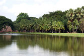 Pond and palm trees — Stock Photo