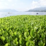 Grass and lake — Stock Photo