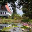 Stock Photo: House and lotuses