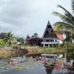 Lotus pond — Stock Photo