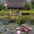 Stock Photo: Lotuses and house