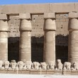 Wall, columns and sheep — Stock Photo