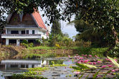 House and lotuses — Stock Photo