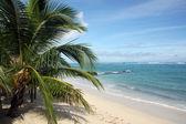 Palm tree and beach — Stock Photo