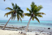 Trees and withe sand beach — Stock Photo
