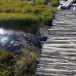 Stock Photo: River and grass