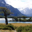 Stock Photo: Tree, lake, mountain