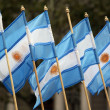 Argentinian flags — Stock Photo