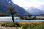 Tree, lake, mountain — Stock Photo