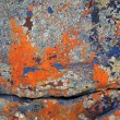 Stock Photo: Lichen Abstracts