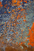 Lichen Abstracts — Stock Photo