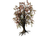 Rendered 3d model of tree isolated on white — Stock Photo