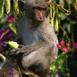 Monkey on a branch - Stock Photo
