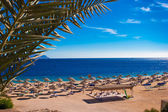 Red sea coast — Foto Stock