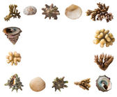 Shells and corals frame — Stock Photo