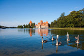 Swans near Trakai castle — Stock Photo
