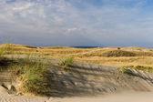 Nagliai dune — Foto Stock