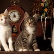 Stock Photo: Three kitten