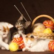 Three kitten — Stock Photo