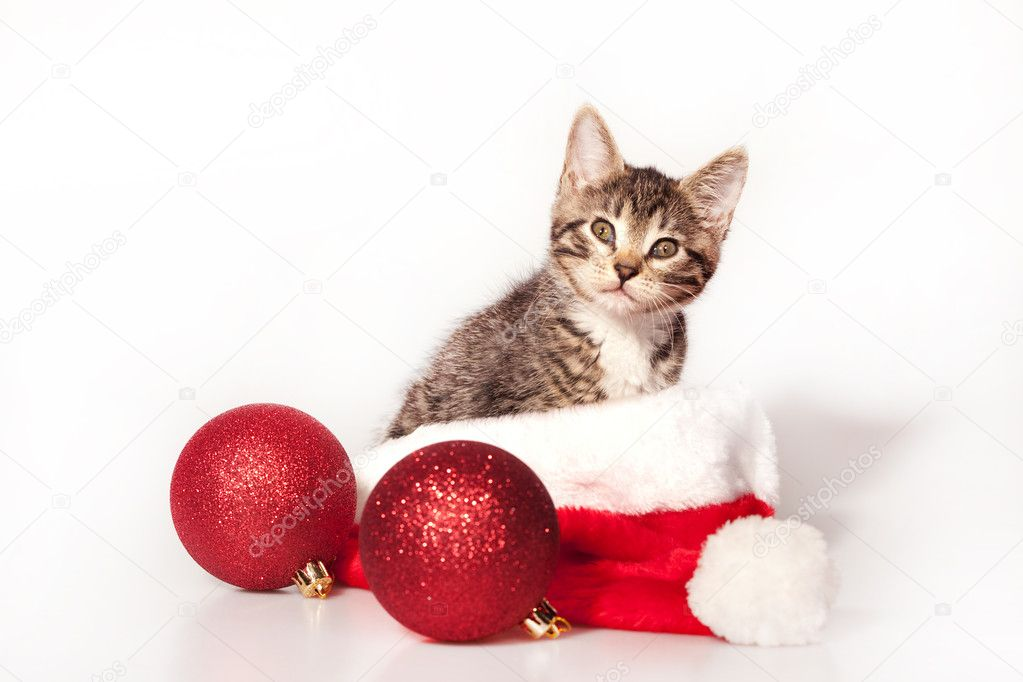 Little kitty sitting on the christmas decorations and headdress of santa claus — Stock Photo #3909973