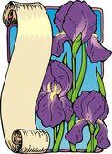 Iriss scroll — Stock Vector
