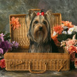 Stock Photo: Dog in wattle case